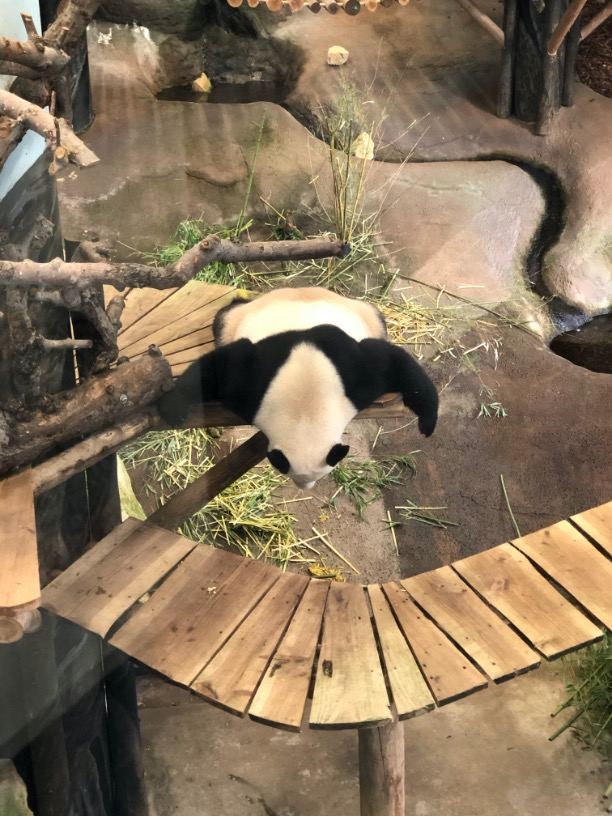 Sleeping-panda-5-x-februari-favorieten-blogs-tot-op-zekere-hoogte.jpg